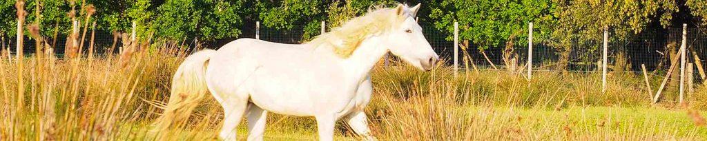 Adria und die weißen Pferde