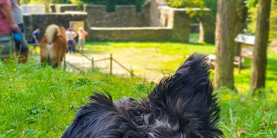 Eifel, Traumpfade mit Hund